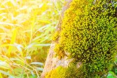 蕨在树残余部分增长在热带雨林里 免版税库存照片