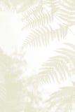 蕨在森林地离开,哀悼背景 免版税库存图片