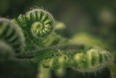 蕨在森林里 库存图片