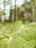 蕨在森林 免版税库存图片