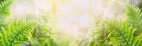 蕨在被弄脏的自然背景,横幅离开 免版税库存图片
