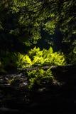蕨在阳光下 库存照片
