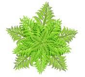 蕨家庭植物在白色背景,传染媒介例证的 库存图片