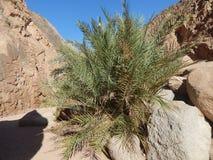 蕨峡谷作为生活的标志在石头中的 免版税库存照片