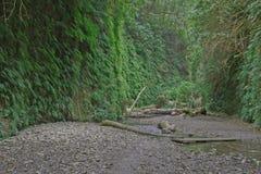 蕨峡谷 库存照片