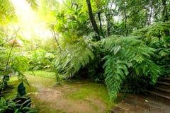 蕨庭院在公园 图库摄影
