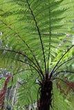 蕨新的结构树西兰 库存图片