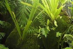 蕨有薄雾的青苔 免版税库存照片