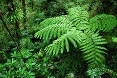 蕨树在云彩森林里 库存图片