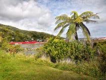 蕨树,西海岸,新西兰 免版税库存图片