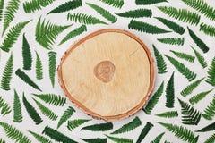 蕨桦树树干的叶子和横断面在灰色背景顶视图的 平位置称呼 库存图片