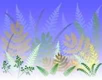 蕨森林 免版税库存图片