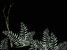 蕨森林 图库摄影
