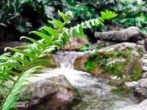 蕨植物 免版税库存照片