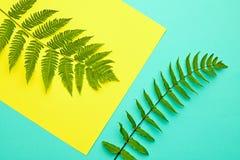 蕨热带叶子 花卉夏天时尚 最小 免版税图库摄影