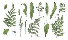 蕨现实收藏 手拉的新芽、叶状体、被设置的叶子和词根 五颜六色的概念例证松弛假期向量 库存例证