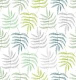 蕨的叶子的图画 图库摄影