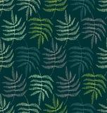 蕨的叶子的图画 库存照片