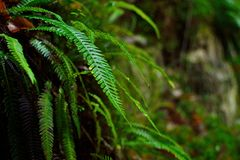 蕨的细节在秋天森林的 库存图片