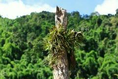 蕨种植生长在干词根 库存图片