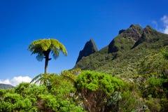 蕨结构树 免版税图库摄影