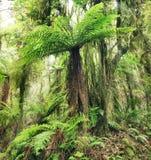 蕨结构树 免版税库存照片