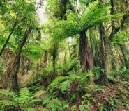 蕨结构树 库存图片