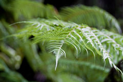 蕨绿色密林 库存图片