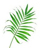 蕨绿色查出的叶子 库存图片