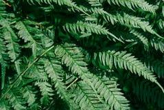 蕨绿色模式 背景蓝色云彩调遣草绿色本质天空空白小束 库存照片