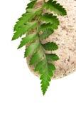 蕨绿色石头 免版税库存图片