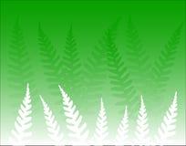 蕨绿色 库存图片