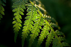 蕨绿色 免版税库存照片