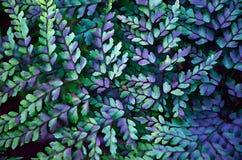 蕨背景数字式例证 图库摄影