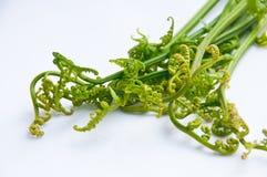 蕨蔬菜 图库摄影