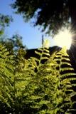 蕨被画对太阳 免版税库存图片