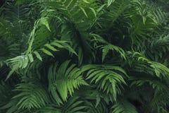 蕨绿色叶子与雨珠的在热带 顶视图 背景蓝色云彩调遣草绿色本质天空空白小束 图库摄影