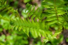 蕨绿色年轻人 库存照片