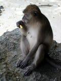 薄脆饼干猴子 免版税库存图片