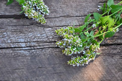 薄荷的花和叶子在树 免版税库存图片