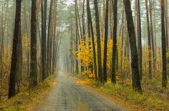 薄雾、雨和森林 免版税库存照片