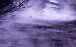 薄雾在森林背景中 库存图片