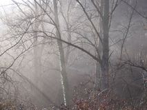 薄雾在森林里 免版税库存图片