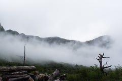 薄雾在森林 库存图片