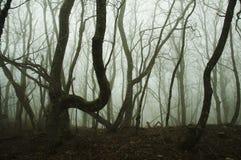 薄雾在秋天森林里 免版税库存照片
