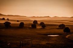 薄雾在米德兰平原:乌贼属 免版税库存图片