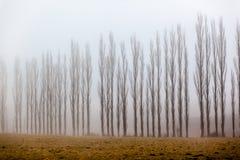 薄雾垂直的林木线横向 库存图片