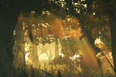 薄雾彩虹 库存图片