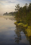 薄雾早晨瑞典 免版税图库摄影