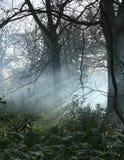 薄雾森林地 图库摄影